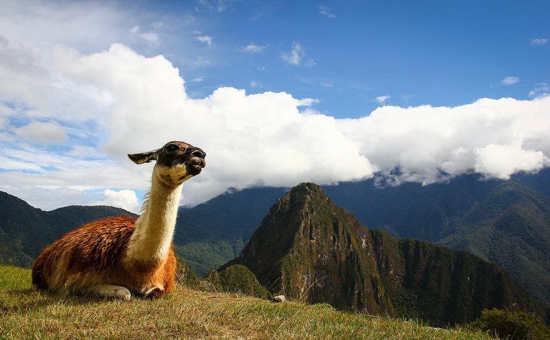 Llama am Machu Picchu