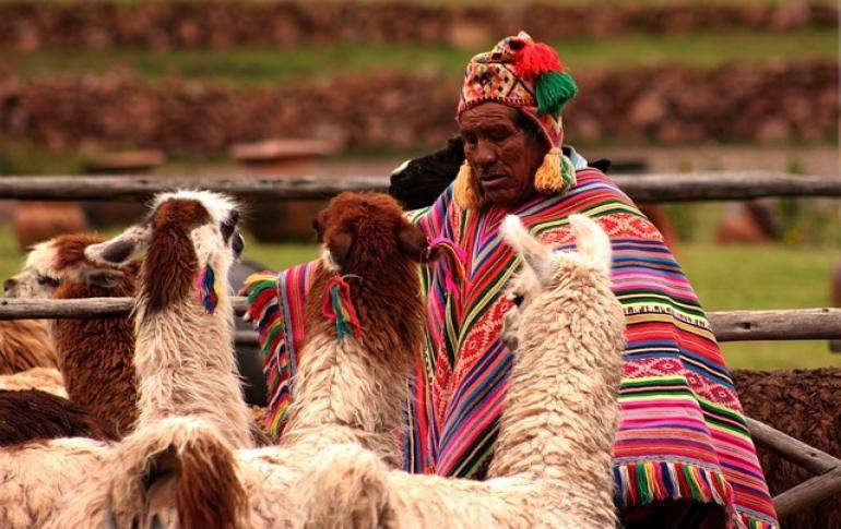Mann in traditioneller kleidung mit lamas