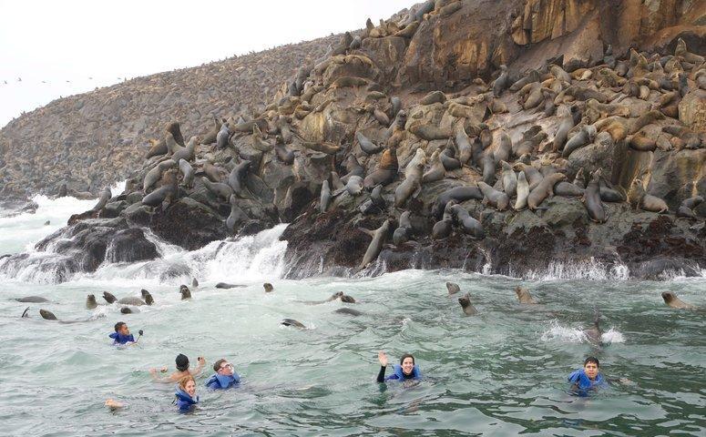 Viajeros nadando con lobos