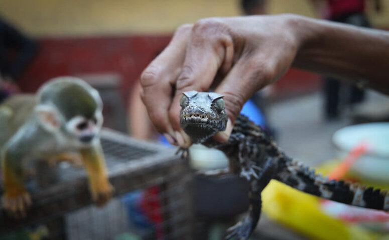 souvenir tiere am belen markt